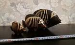 Рыбы бальс  Индонезия