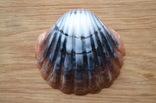 Мыло ручной работы -Морская раковина- с ароматом арбуза 74 г