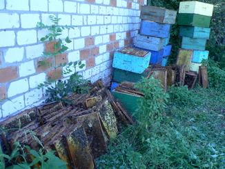 Пчелиный сот, для выращивания личинок моли.